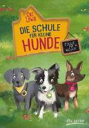 Die Schule für kleine Hunde